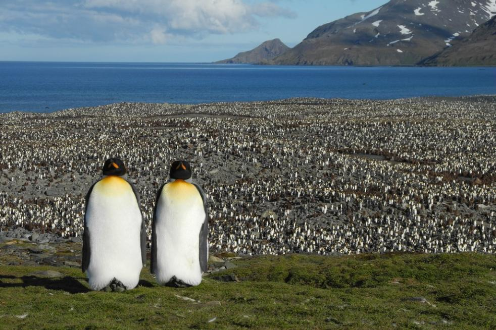 Falkland/Malvinas, South Georgia and Antarctic Peninsula 20 days - 19 nights