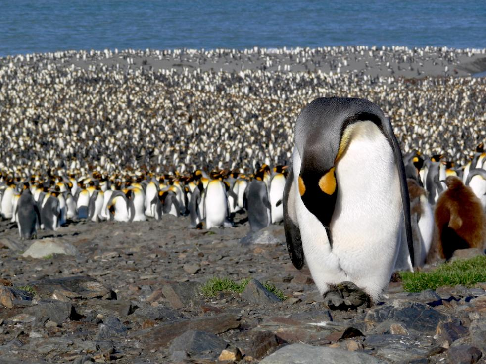 Falkland/Malvinas, South Georgia and Antarctic Polar Circle 23 Days - 22 Nights