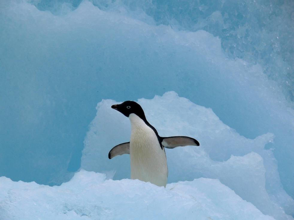 Antarctic Polar Circle, 12 days - 11 nights