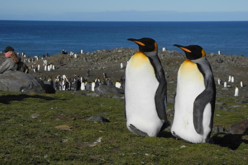 Falkland/Malvinas, South Georgia and Antarctic Peninsula 21 days - 20 nights