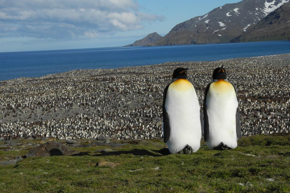 South Georgia & Antarctic Peninsula: Penguin Safari
