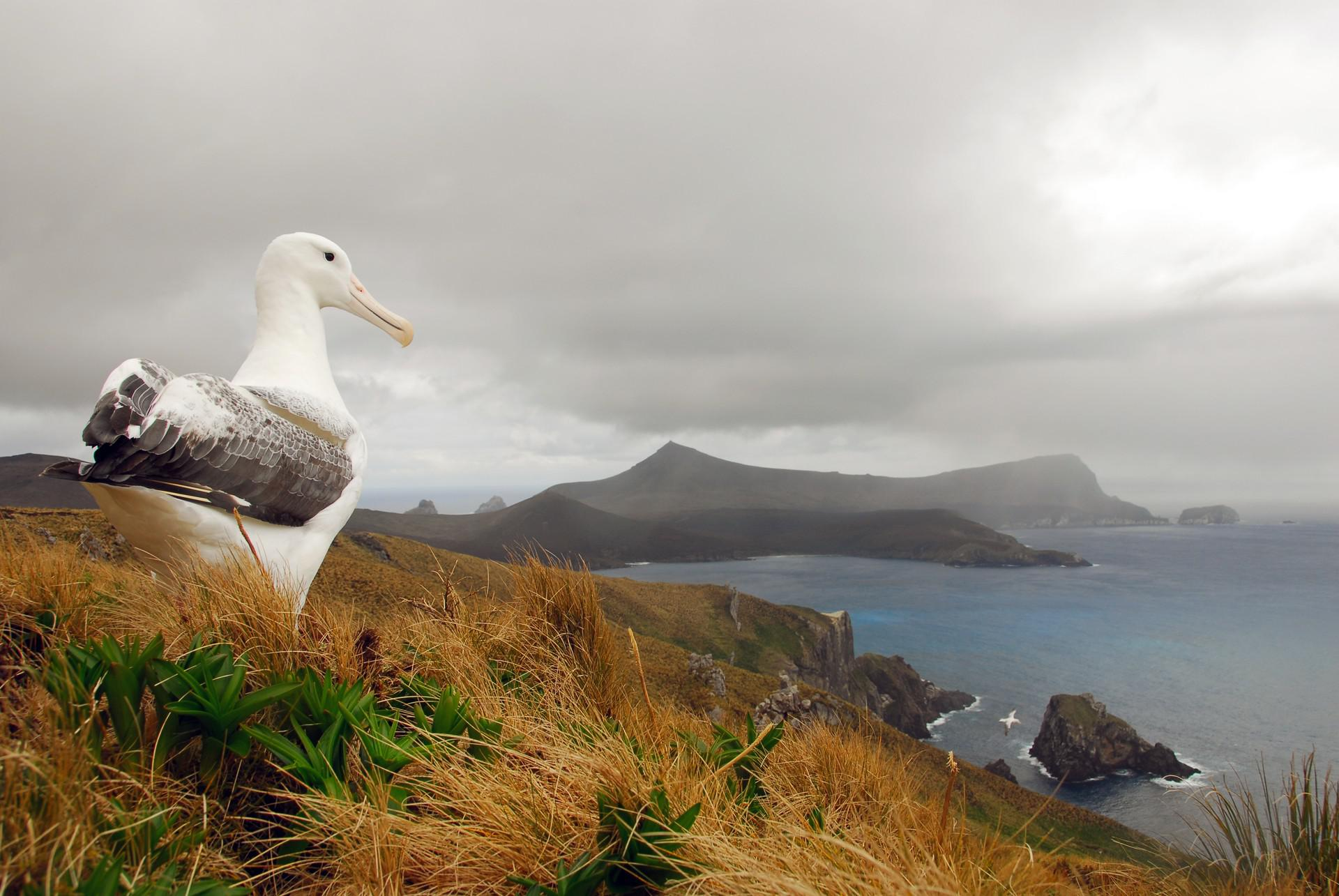 Forgotten Islands of the South Pacific: Subantarctic Islands
