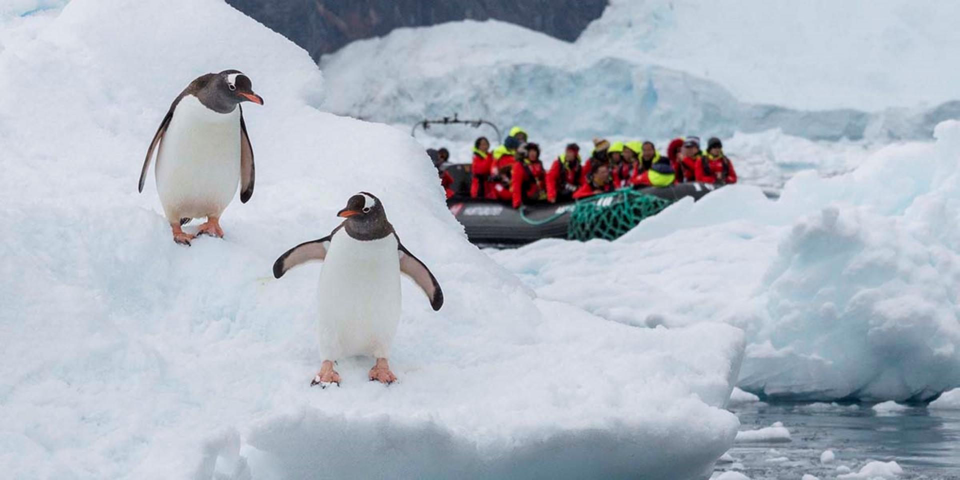 Antarctica, Chilean Fjords and Falklands � Great Explorers and Solar Eclipse